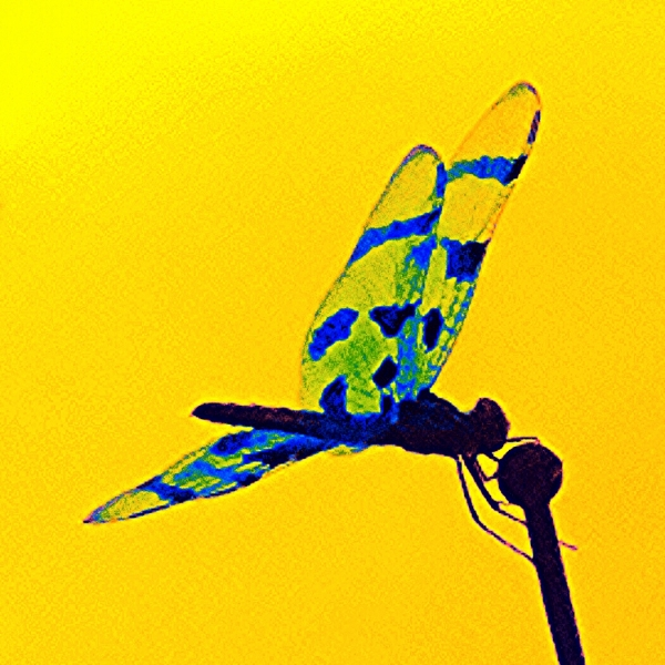 Dragon fly, antena, hitch hiker
