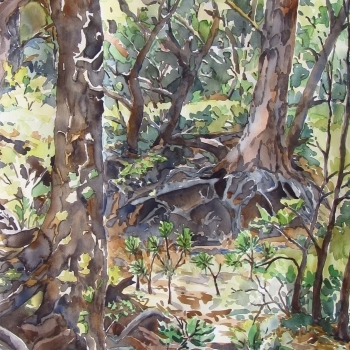 """Kristen Muench """"Root Place"""" 30x22 watercolor Pinery, CO"""
