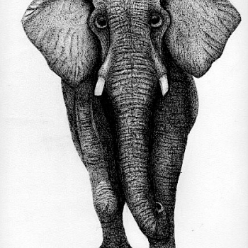 Elephant, animals, pen and ink, graphite
