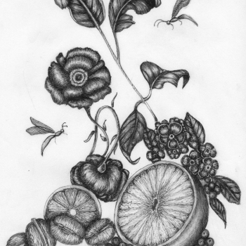 christina thompson, pen and ink, drawings, philadelphia, floral. still life