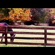 horse, pony, fall, colors, pasture, fence